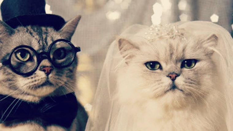 imagens engraçadas de casamento